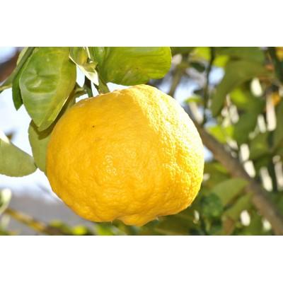Escalope de poulet au citron.